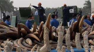 Workers destroy illegal ivory in Dongguan, southern Guangdong province, China, Monday, 6 January 2014