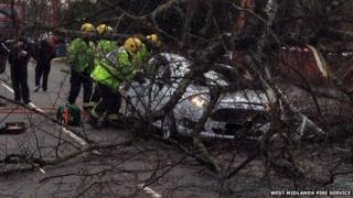 Car trapped under tree