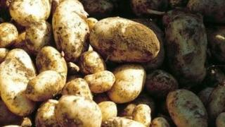 Jersey Royal potatoes