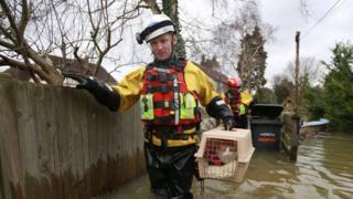 RSPCA rescue