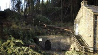 Fallen trees at Killhope