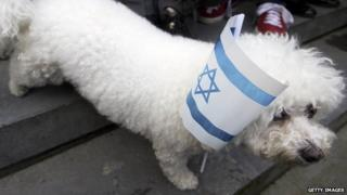 Dog with an Israeli flag at a pro-Israel demonstration
