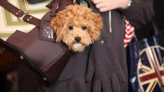 Dog in handbag