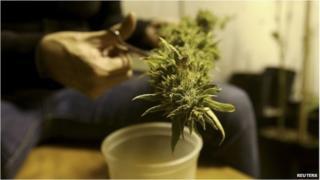 Marijuana plant pot