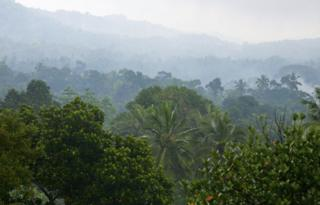 Jungle in Sri Lanka