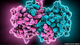 Molecular model of parts of the Ebola virus