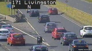Cow on the M8