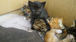 Kittens abandoned in Norfolk