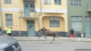 Reindeer running through the streets