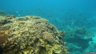 Fish are seen swimming around coral formations in Lady Elliot Island, Great Barrier Reef, Australia, 15 January 2012