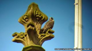 Peregrine on a cathedral ornament