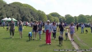 Greyhound Walk