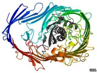 LptDE protein