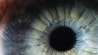 The cornea is the transparent outermost covering of the eye