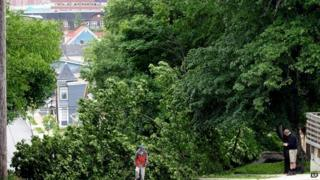 Trees brought down by storm in Dartmouth, Nova Scotia. 5 July 2014