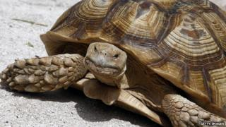 File image of a tortoise
