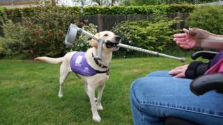 Canine partner bringing owner crutch