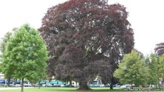 Tree in Montpellier Gardens, Cheltenham
