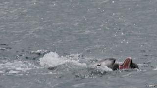 Dolphin attack