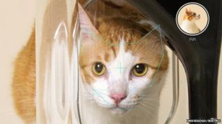 Bistro cat feeder