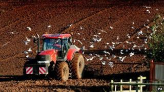 Tractor is followed by gulls