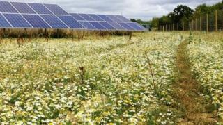 An existing Lightsource solar park