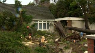 Tree blown down by storm