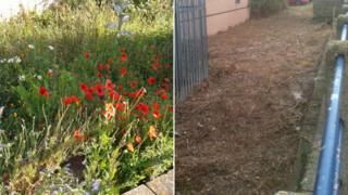 Poppy garden before and after being destroyed