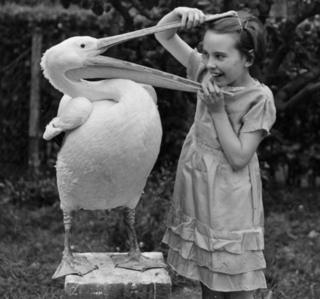 June plays with a pelican