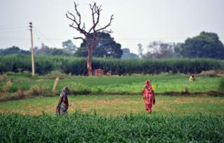 Indian residents arrive to defecate in an open field in a village in the Badaun district of Uttar Pradesh.