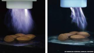 Cold plasma treating almonds