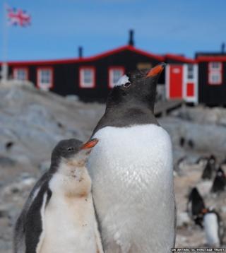 Penguins outside post office on Goudier Island