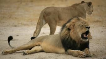 Cecil the lion - 21 October 2012