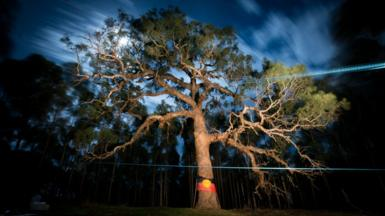 "The ""Directions Tree"" seen at night with an Aboriginal flag draped around it"