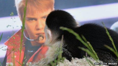 Mally next to a picture of Justin Bieber