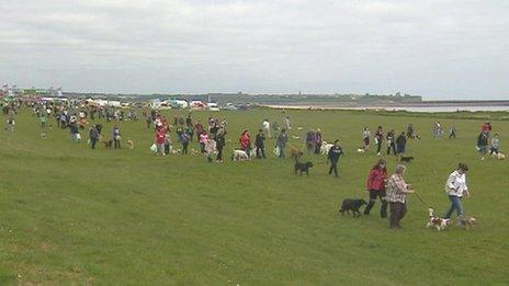 Dogs Near South Shields
