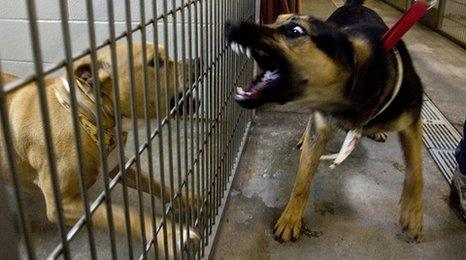 Two dogs facing off