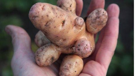 Misshapen potato