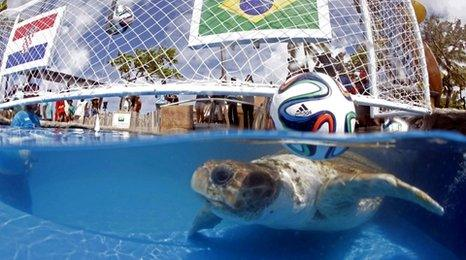 World Cup turtle