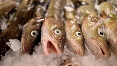 Cod at Peterhead fish market
