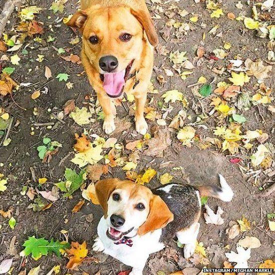 Meghan Markle's dogs