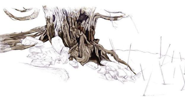 Ilustración de un tronco de tejo