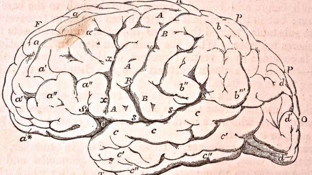 İnsanda 100 milyarda yaxın neyron mövcuddur və elə də böyük olmaya bədənimizlə müqayisədə, beynimiz çox böyükdür.)
