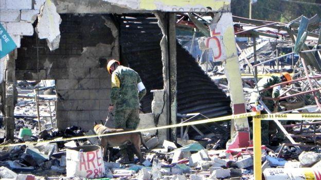 El ejército recorre los escombros con perros adiestrados para localizar personas.