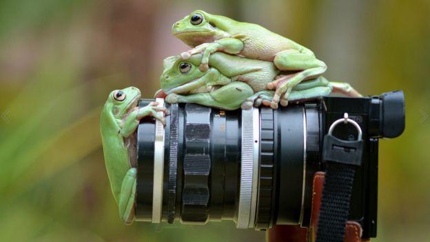 Muhammad Roem拍攝的野外青蛙