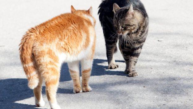Кошки часто конфликтуют друг с другом