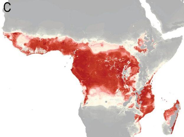 Africa risk