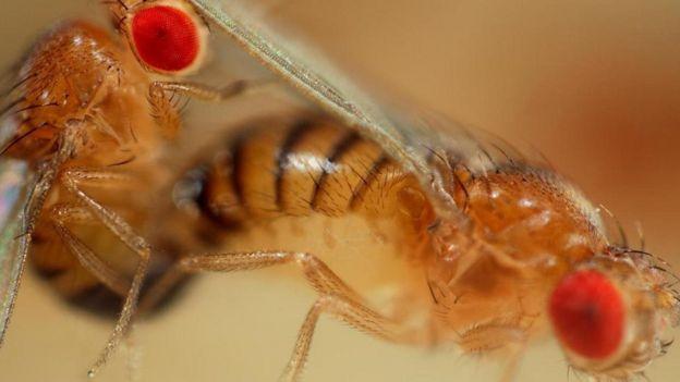drosophila report