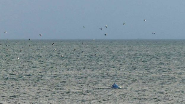 Whale and gulls