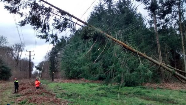 Trees on powers lines in Fernhurst